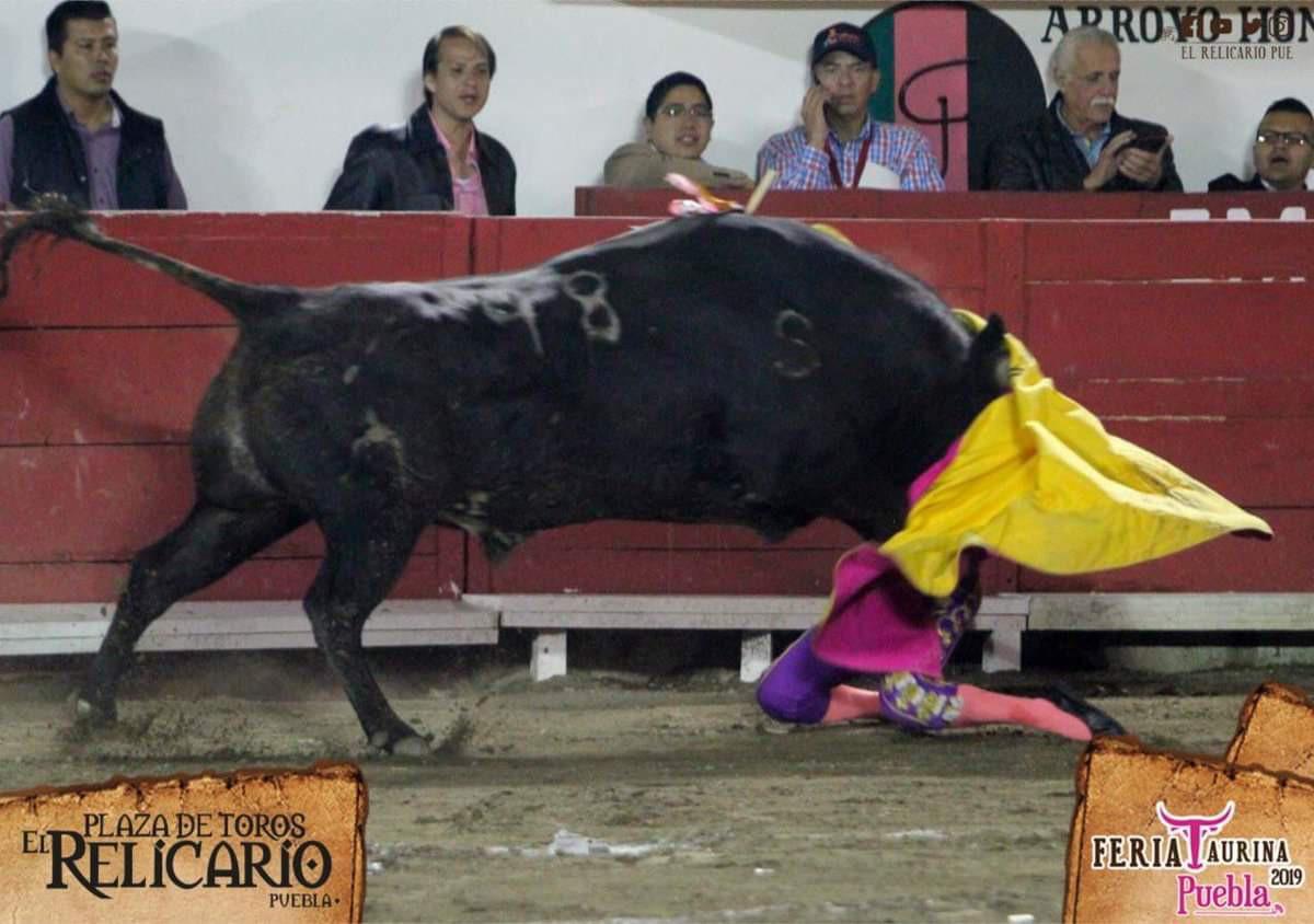 Nữ võ sĩ bị bò tót nặng nửa tấn húc vỡ hốc mắt, gãy xương hàm - Ảnh 1.