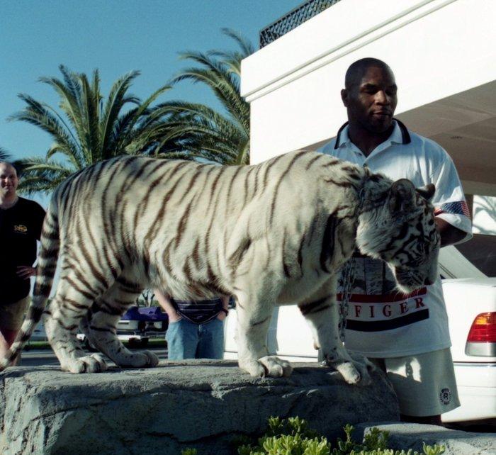 Thú chơi ngông thích nuôi hổ của Mike Tyson và giai thoại mất oan 6 tỷ đồng vì để vật nuôi ăn thịt người - ảnh 2