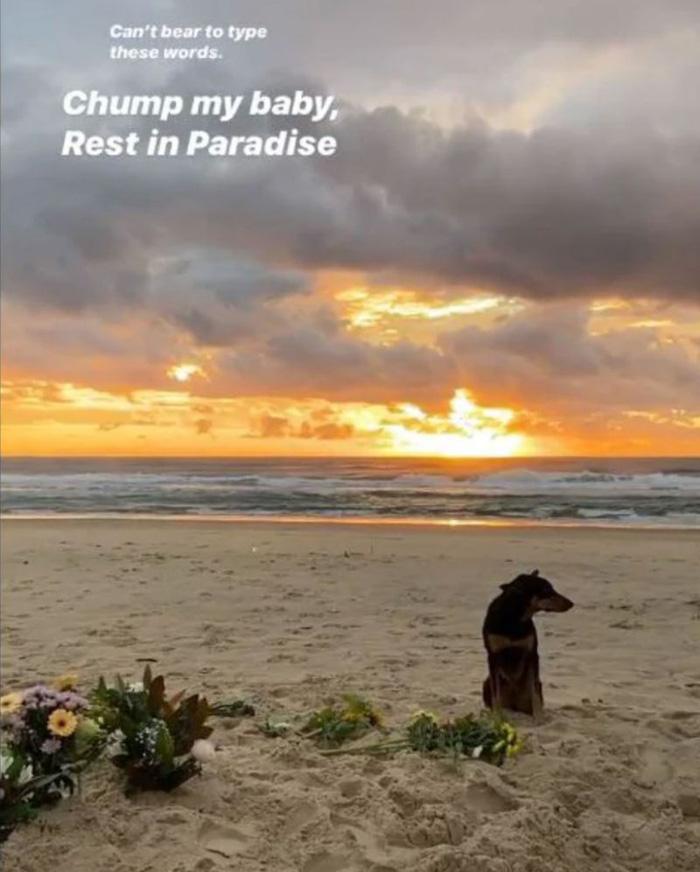 Xót xa hình ảnh chú chó buồn bã ngồi đợi nhà vô địch thế giới tại bờ biển nơi anh không may bị chết đuối - ảnh 1