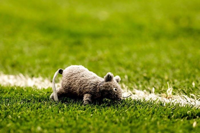 CĐV Atletico ném đàn chuột bông xuống sân, chào đón kẻ phản bội Courtois trở về - Ảnh 1.