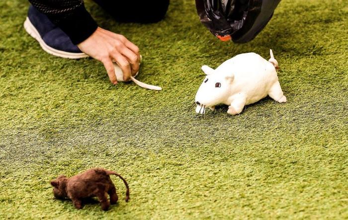CĐV Atletico ném đàn chuột bông xuống sân, chào đón kẻ phản bội Courtois trở về - Ảnh 2.