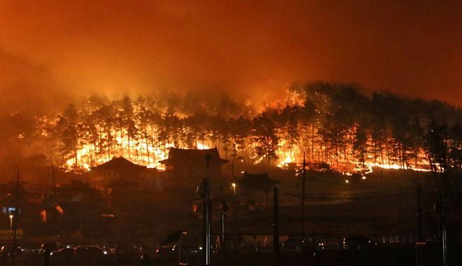 Son Heung-min hào phóng tặng tiền cho nạn nhân của thảm họa cháy rừng tại Hàn Quốc - Ảnh 1.
