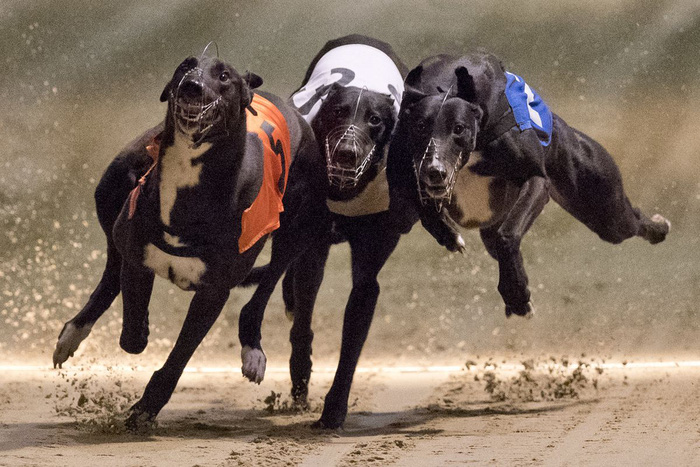 """Chú chó """"ăn"""" ma túy đá, thắng giải gần 100 triệu đồng và cái kết - Ảnh 2."""