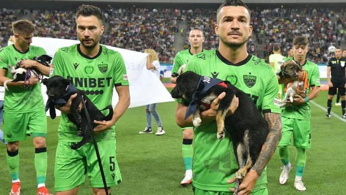 Đội bóng bế 11 chú chó vào sân và thông điệp ý nghĩa - ảnh 1