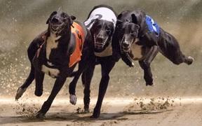 """Chú chó """"ăn"""" ma túy đá, thắng giải gần 100 triệu đồng và cái kết"""