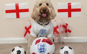 Nàng chó thông minh nhất nước Anh dự đoán chiến thắng cho đội nhà