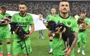Đội bóng bế 11 chú chó vào sân và thông điệp ý nghĩa