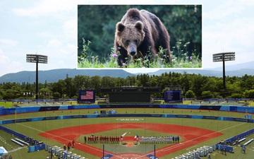 Gấu đen khổng lồ xuất hiện gần địa điểm thi đấu Olympic