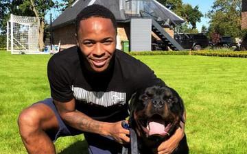 Vung hàng trăm triệu mua chó cảnh vệ chuyên nghiệp nhưng sao Man City vẫn bị trộm viếng thăm
